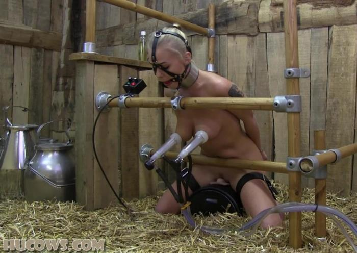[HuCows - Nipple torture machines] Darina [Milked on a Sybian] [FullHD]